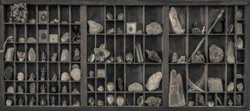 Un gabinete de curiosidades Foto de archivo libre de regalías