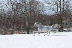Un galoppo nella neve fotografie stock
