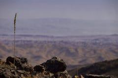 Un gambo solo fra le pietre nel deserto di Judean contro la b Fotografie Stock