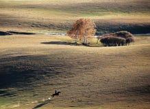 Un ganadero del caballo en pradera del otoño imagen de archivo libre de regalías