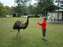 Un garçon alimente l'émeu en parc naturel dans l'Australie Photographie stock