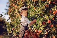 Un garçon dans un champ de pommiers Photo stock