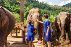 Un garçon et une fille caressent un éléphant au sanctuaire en Chiang Mai T photos stock