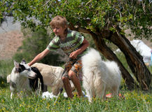 Un garçon joue avec un chien de traîneau de chien Photos libres de droits