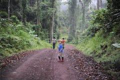 Un garçon marchant dans une forêt tropicale en vallée de Danum au Bornéo Image libre de droits