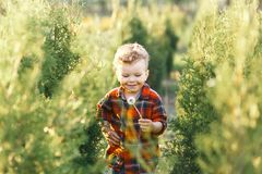 Un garçon mignon ayant l'amusement dehors dans le pays en été au coucher du soleil un garçon jouant avec les pissenlits jaunes da images libres de droits