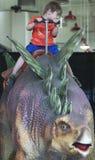 Un garçon monte un Stegosaurus à la planète de T-Rex Image stock