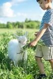 Un garçon se tient avec une chèvre sur le champ un jour ensoleillé Il f Images stock