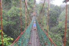 Un garçon sur un passage couvert d'auvent dans la forêt tropicale au Bornéo Photographie stock libre de droits