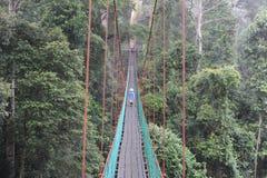 Un garçon sur un passage couvert d'auvent dans la forêt tropicale au Bornéo Photographie stock