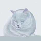 Un gatito Fotos de archivo