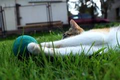 Un gatito aburrido que juega con alguna bola en la posición de mentira Un gato perezoso máximo fotos de archivo libres de regalías