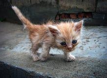 Un gatito de la compasión imagenes de archivo