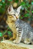 Un gatito determinado del oído se está sentando en una roca imagen de archivo