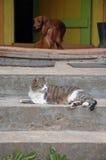 Un gatito en la escalera con el perro imagen de archivo libre de regalías