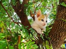 Un gatito en un árbol Foto de archivo