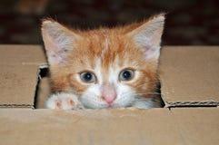 Un gatito en una caja Imágenes de archivo libres de regalías