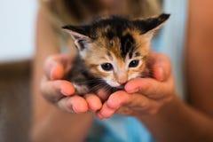 Un gatito manchado recién nacido que se sienta en la palma de manos Foto de archivo