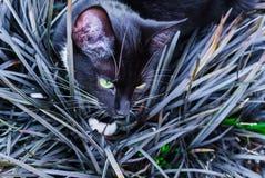 Un gatito negro hermoso que oculta en un macizo de flores decorativo en el jardín fotos de archivo