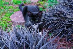 Un gatito negro hermoso que oculta en un macizo de flores decorativo en el jardín foto de archivo
