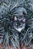 Un gatito negro hermoso que oculta en un macizo de flores decorativo en el jardín imagenes de archivo