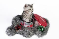 Un gatito para la Navidad. Fotografía de archivo
