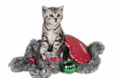 Un gatito para la Navidad. Fotos de archivo