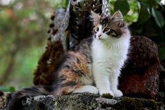 Un gatito que se sienta en una piedra en un jardín Imágenes de archivo libres de regalías