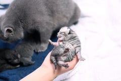 Un gatito viejo lindo del día Imagen de archivo libre de regalías