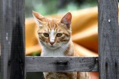 Un gato Fotografía de archivo