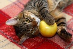 Un gato Foto de archivo
