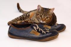 Un gato Fotos de archivo libres de regalías