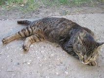 Un gato Fotos de archivo