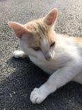 Un gato Foto de archivo libre de regalías