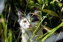Un gato Imágenes de archivo libres de regalías