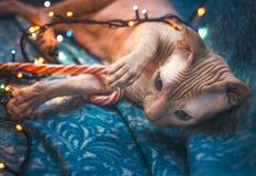 Un gato acoge con satisfacción el Año Nuevo Foto de archivo libre de regalías