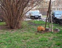 Un gato adentro en la calle imágenes de archivo libres de regalías
