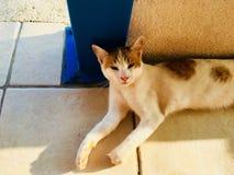 Un gato adorable del parásito de la isla fotos de archivo libres de regalías