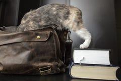 Un gato bastante curioso subió en una cartera de cuero vieja, y Foto de archivo libre de regalías