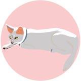Un gato blanco Imagenes de archivo