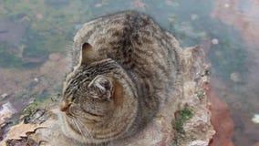 Un gato cerca de las aguas minerales en Rupite en Bulgaria al sudoeste - vídeo almacen de video