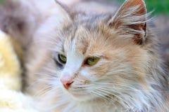 Un gato colorido hermoso que miente en una cesta foto de archivo libre de regalías