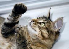 Un gato con los ojos verdes Imagen de archivo libre de regalías