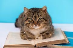 Un gato con los vidrios se sienta cerca de un libro abierto imagenes de archivo