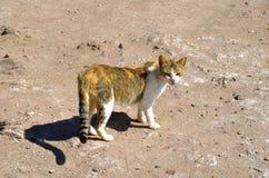 Un gato cuidadoso salvaje fotos de archivo libres de regalías