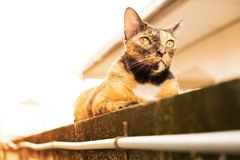 Un gato de gato atigrado adulto de la relajación que coloca en la pared el gato es lindo y foto de archivo