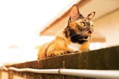 Un gato de gato atigrado adulto de la relajación que coloca en la pared el gato es lindo y imagen de archivo libre de regalías