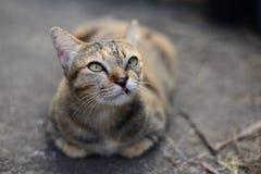 Un gato de gato atigrado gris joven que mira al cielo y que descansa sobre el piso del cemento imagen de archivo