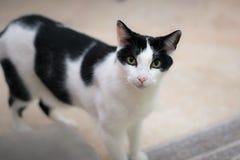 Un gato de casa hermoso quiere ser acariciado fotografía de archivo