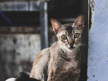 Un gato de la calle Foto de archivo libre de regalías